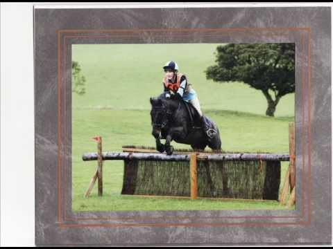 Stunning 13.3hh Allrounder/PC Pony for sale