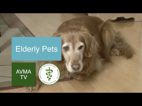 Elderly Pets and Your Veterinarian