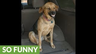 Dog refuses to leave car, makes ridiculous faces
