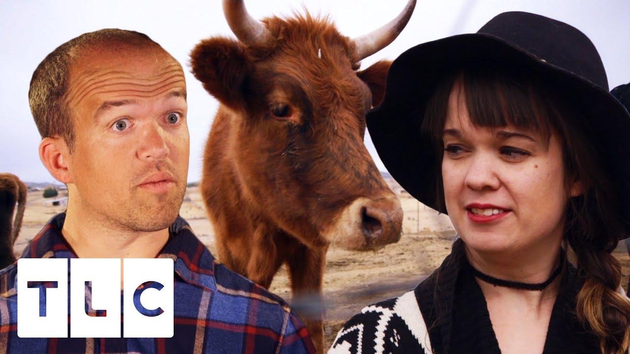 Lauren And Nate Go Cow Shopping For Their Dream Farm   Little Life On The Prairie