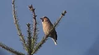 L'oiseau devinette du lundi