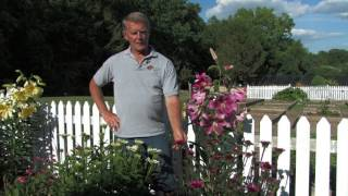 Cone Flowers: Rose-Hill Gardens Video Series Episode 10