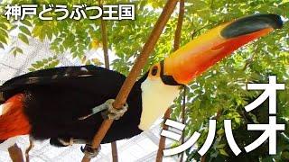 神戸市中央区『神戸どうぶつ王国』 熱帯の森エリアでは、オオハシさん達...