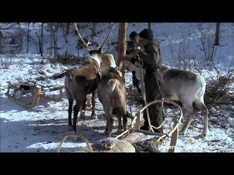 Thiên nhiên hoang dã nước Nga - Vùng Siberia - Full HD [Thuyết minh]