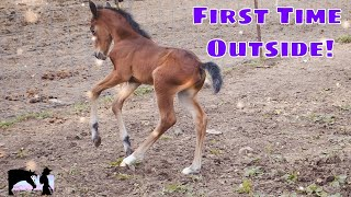 Foal's First Time Outside