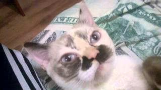 Невероятно!!! Разве кошки так мурлыкают?!