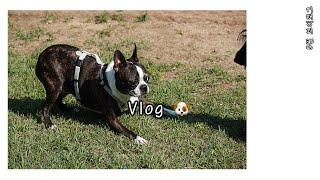 Vlog | [5월] 브이로그 | 동물농장, 애견펜션,…