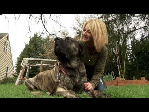 Dick Hannah Dealerships: The Mastiff Rescue Nice Story
