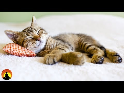 8 Hour Super Sleep Music: Relaxing Music, Meditation Music, Sleeping Music, Relaxation Music, ☯2479