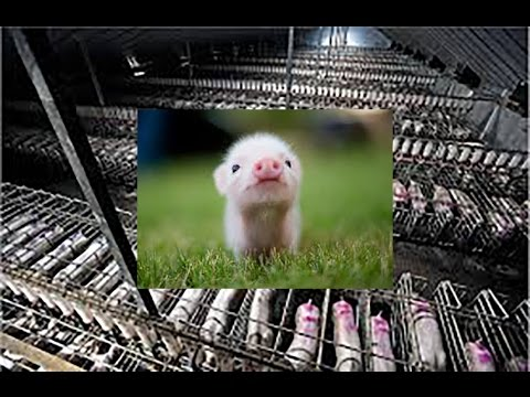 Compassion Montage - Animal Farming Industry Mashup (contains graphic images)