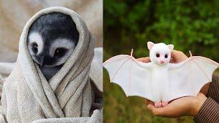 Animales divertido y lindo  Funny and Cute Animals #15