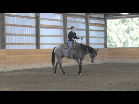 AQHA Western Pleasure Training1