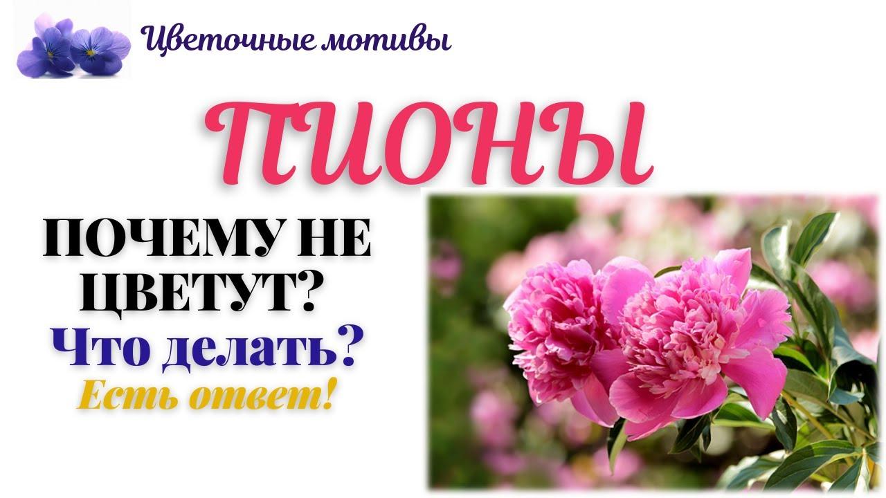 Почему не цветут пионы? Что любят пионы? Вот несколько секретов!