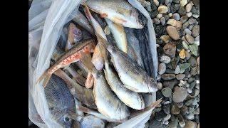 Как я рыбачил в Абхазии на море. Ловля барабульки, ставридки и морского карася.