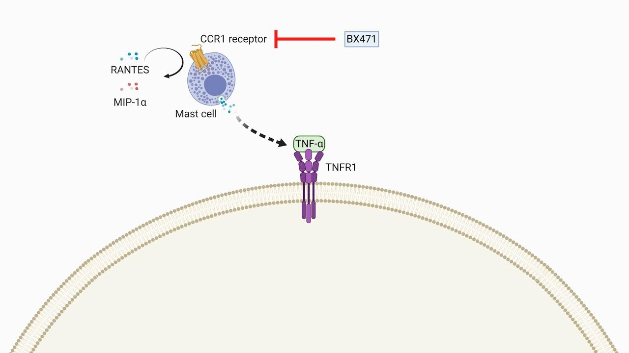 Sejtszervecske - Citoplazma méregtelenítés