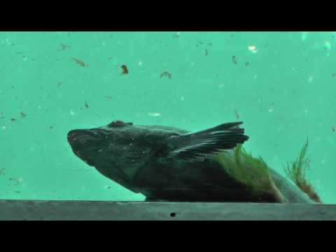 Seattle 2016 Vlogs - Seattle Aquarium pt8 - Worker In Peril! THE UNDERDOME