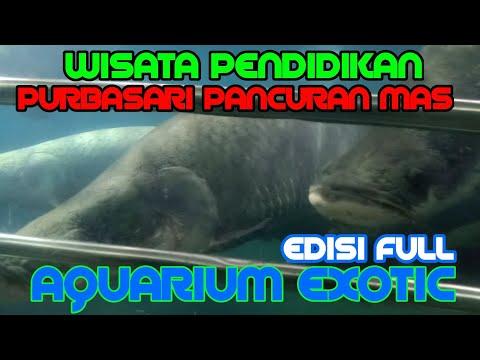 purbasari-pancuran-mas-purbalingga-|-exotic-aquarium-|-giant-aquarium-2020