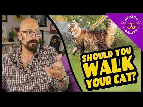 Should You Walk Your Cat?
