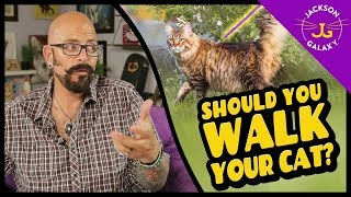 Should You Walk Your Cat?