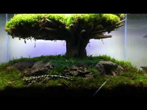 Moss Bonsai: Tiger Salamander Setup