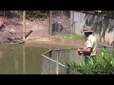 Os crocodilos na Austrália