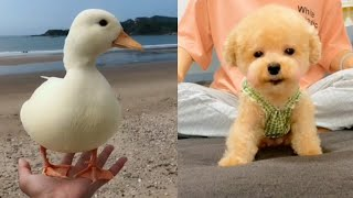 AWW Cute animals Videos Compilation cute moment of the animals💗Cutest Animals #3