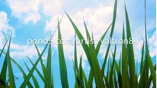 green grass and sun,environmental protection concept