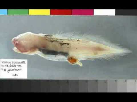 Bizarre Fishes Discovered After The Tsunami Of 2004