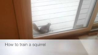 How to train a squirrel