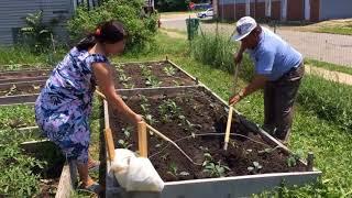 Urban Agriculture Enriches Buffalo Inner City Neighborhood
