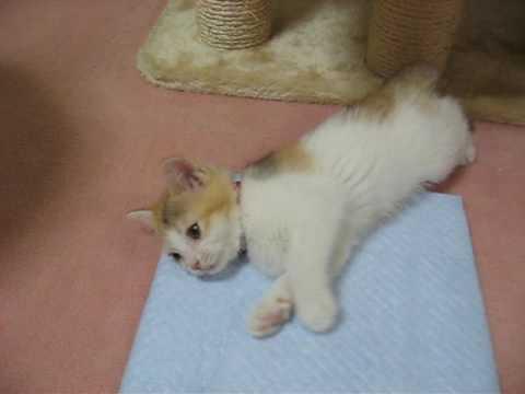 Kitten Love  子猫の主張