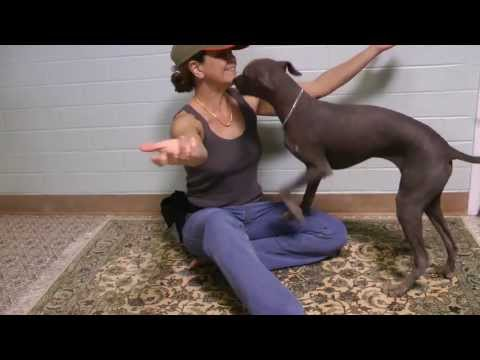 Hairless Dog doing Tricks