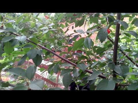 Животные тропических лесов для детей видео