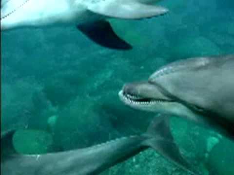 Wild dolphin in Tokyo islands    ~ jaw2