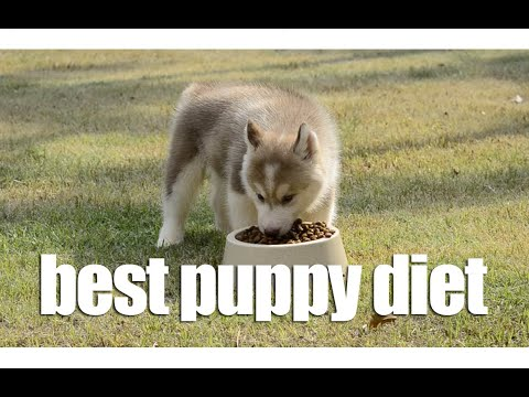 Best dog food for husky puppies uk