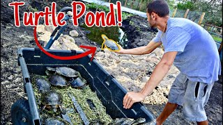 RELEASING ALL TURTLES IN NEW MASSIVE POND!!!!!