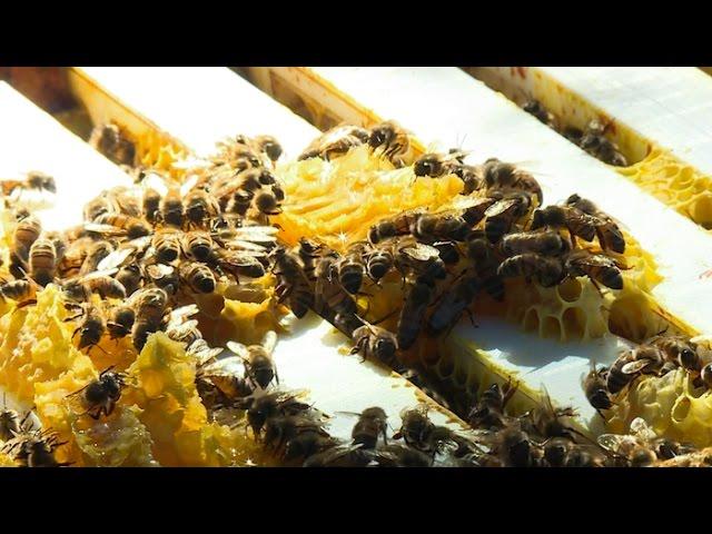 Insolite : les abeilles, source de bien-être