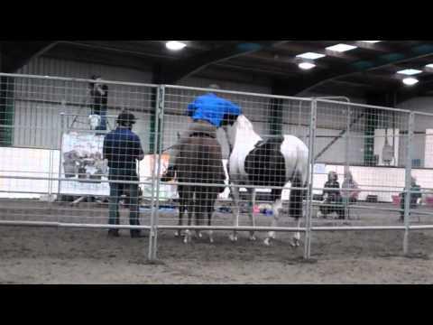Monty Roberts - Headshy Horse - England Tour - Sep 2011