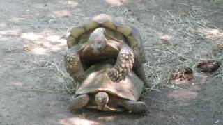 Maryland zoo in Baltimore.turtle sex
