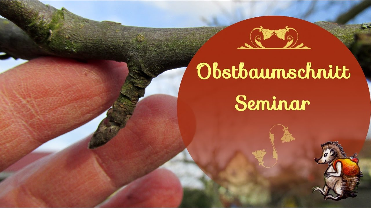 obstbaumschnittseminar ich lerne wie man obstb ume schneidet youtube. Black Bedroom Furniture Sets. Home Design Ideas