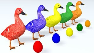 Learn Colors with Animals Cartoon for Children Ducks and Surprise Eggs  Learn Animal Name & Soun