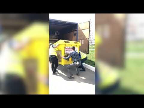 В Орле появились первые контейнеры для раздельного сбора мусора