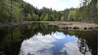 Alter Tristacher See - Naturdenkmal