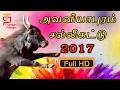 Avaniyapuram Jallikattu 2017 | Visuals of Avaniyapuram Jallikattu | Thamizh Padam