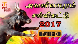 Avaniyapuram Jallikattu 2017 | Visuals of Avaniapuram Jallikattu | Live Video