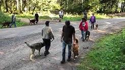 Hundeseminar,Hundeschule,Verhaltenstherapie,Hundetrainer, Aggressionsverhalten,Leinenführigkeit