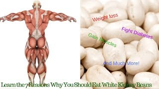 White Kidney Beans Benefits - 7 Reasons Why You Should Eat White Kidney Beans Regularly