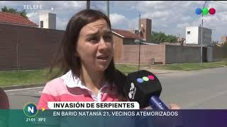 INVASION DE VIBORAS EN LA ZONA DE MATIENZO