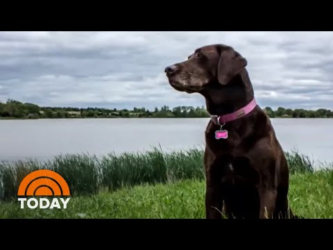 'a-dog-named-beautiful':-marine-shares-unforgettable-bond-with-his-canine-|-today