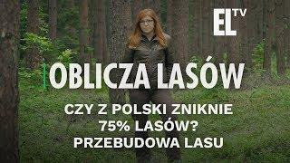 Czy z Polski zniknie 75% lasów?  Przebudowa lasu   Oblicza lasów #87